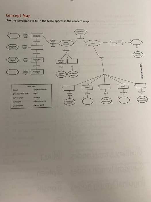 Concept Map Use the word bank to fill in the blank spaces in the concept map. corsists of dan ymphatic ymphatic vessels ocane