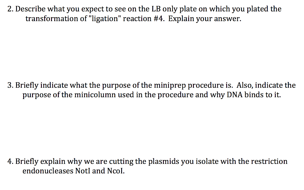 2. Describe what you expect to see on the LB only plate on which you plated the transformation ofligation reaction #4. Explain your answer. 3. Briefly indicate what the purpose of the miniprep procedure is. Also, indicate the purpose of the minicolumn used in the procedure and why DNA binds to it. 4. Briefly explain why we are cutting the plasmids you isolate with the restriction endonucleases NotI and Ncol