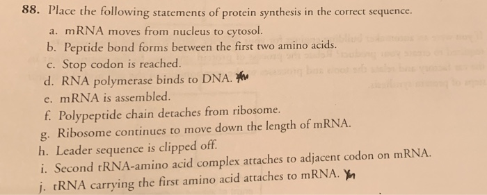 88. Place the following statements of protein synthesis in the correct sequence. a. mRNA moves from nucleus to cytosol. b. Peptide bond forms between the first two amino acids. c. Stop codon is reached. d. RNA polymerase binds to DNA. w e. mRNA is assembled f Polypeptide chain detaches from ribosome. g. Ribosome continues to move down the length of mRNA. h. Leader sequence is clipped off i. Second tRNA-amino acid complex attaches to adjacent codon on mRNA. tRNA carrying the first amino acid attaches to mRNA. yn