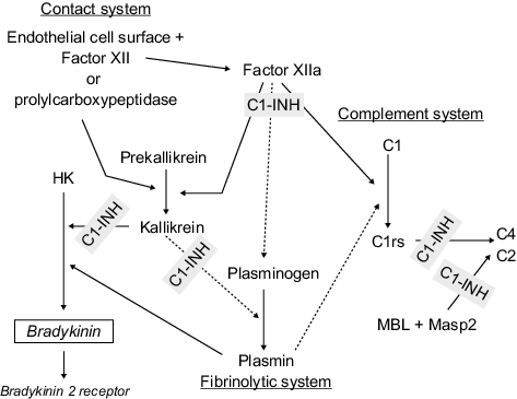 Contact system Endothelial cell surface Factor XI or prolylcarboxypeptidase Factor XIla C1-INH Complement system C1 Prekallikrein HK ←R -Kallikrein C4 C2 C1rs- Plasminogen , Bradykinirn MBLMasp2 Plasmin Fibrinolytic system Bradykinin 2 receptor