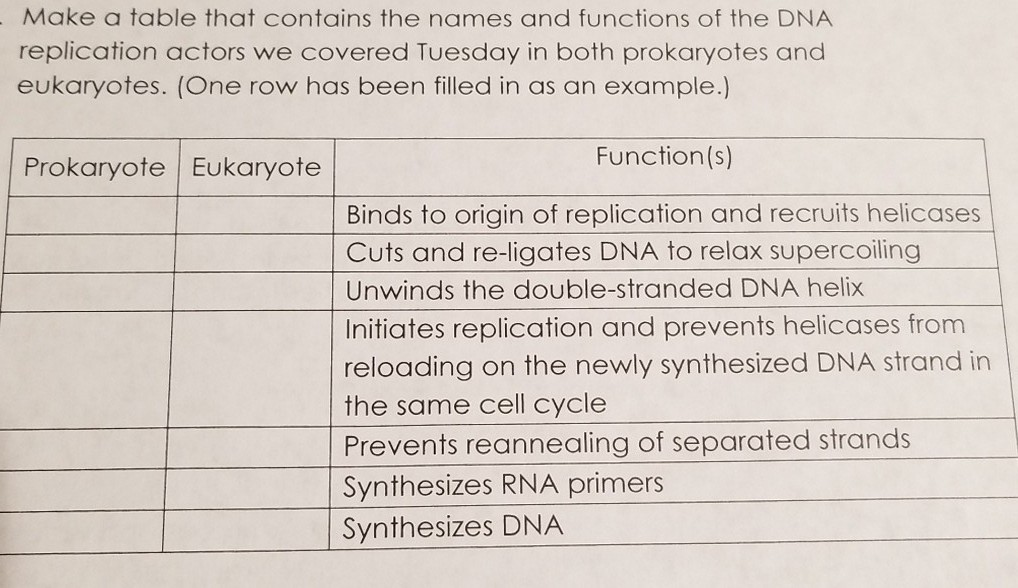 Make a table that contains the names and functions of the DNA replication actors we covered Tuesday in both prokaryotes and eukaryotes. (One row has been filled in as an example.) Prokaryote| Eukaryote Function(s) Binds to origin of replication and recruits helicases Cuts and re-ligates DNA to relax supercoiling Unwinds the double-stranded DNA helix Initiates replication and prevents helicases from reloading on the newly synthesized DNA strand in the same cell cycle Prevents reannealing of separated strands Synthesizes RNA primers Synthesizes DNA