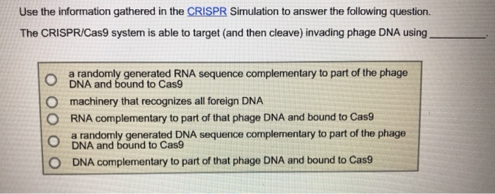 Use the information gathered in the CRISPR Simulation to answer the following question. The CRISPR/Cas9 system is able to target (and then cleave) invading phage DNA using a randomly generated RNA sequence complementary to part of the phage DNA and bound to Cas9 O machinery that recognizes all foreign DNA O RNA complementary to part of that phage DNA and bound to Cas9 O O a randomly generated DNA sequence complementary to part of the phage DNA and bound to Cas9 DNA complementary to part of that phage DNA and bound to Cas9