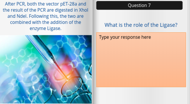 After PCR, both the vector pET-28a and the result of the PCR are digested in Xhol and Ndel. Following this, the two are combined with the addition of the enzyme Ligase. Question 7 What is the role of the Ligase? Type your response here
