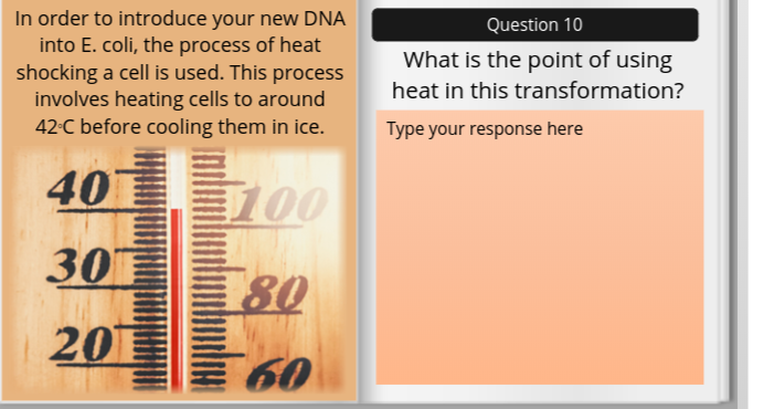 In order to introduce your new DNA into E. coli, the process of heat shocking a cell is used. This process involves heating cells to around 42-C before cooling them in ice. Question 10 What is the point of using heat in this transformation? Type your response here 40 E80
