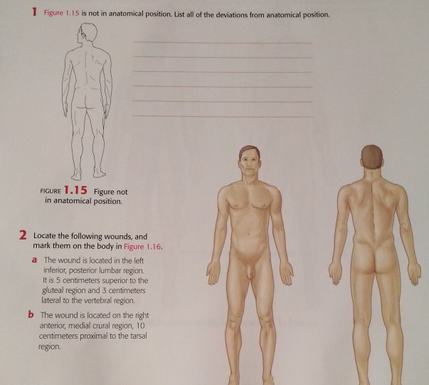 1 Figure 1.15 is not in anatomical position. List all of the deviations from anatomical position. FIGURE 1.15 Figure not in anatomical position. 2 Locate the following wounds, and mark them on the body in Figure 1.16. a The wound is located in the left inferior, posterior lumbar region. It is 5 centimeters superior to the gluteal region and 3 centimeters lateral to the vertebral region. b The wound is located on the right anterior, medial crural region, 10 centimeters proximal to the tarsal region