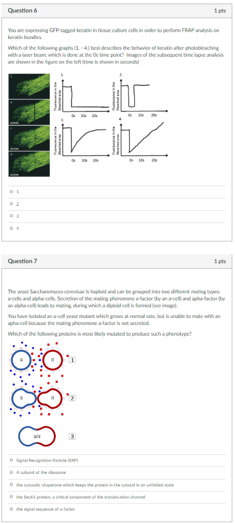 Question 6 1 pts You are expressing GFP-tagged keratin in tissue culture cells in order to perform FRAP analysis on keratin bundles. Which of the following graphs (1. 4.) best describes the behavior of keratin after photobleaching with a laser beam, which is done at the Os time point? Images of the subsequent time lapse analysis are shown in the figure on the left (time is shown in seconds Cs 20s 20s 0s 10s 20s 0s 10s 20s 0 10s 20s 0 1 0 2 0 3 Question 7 1 pts The yeast Saccharomyces cerevisae is haploid and can be grouped into two different mating types: a-cells and alpha-cells. Secretion of the mating pheromone a-factor (by an a-cell) and apha-factor (by an alpha-cell) leads to mating, during which a diploid cell is formed (see image) You have isolated an a-cell yeast mutant which grows at normal rate, but is unable to mate with an apha-cell because the mating pheromone a-factor is not secreted. Which of the followine proteins is most likely mutated to produce such a phenotype? O Signal Recognition Particle (SRP) O O O O A subunit of the ribosome the cytosolic chaperone which keeps the protein in the cytosol in an unfolded state the Sec61 protein, a critical component of the translocation channel the signal sequence of a-factor