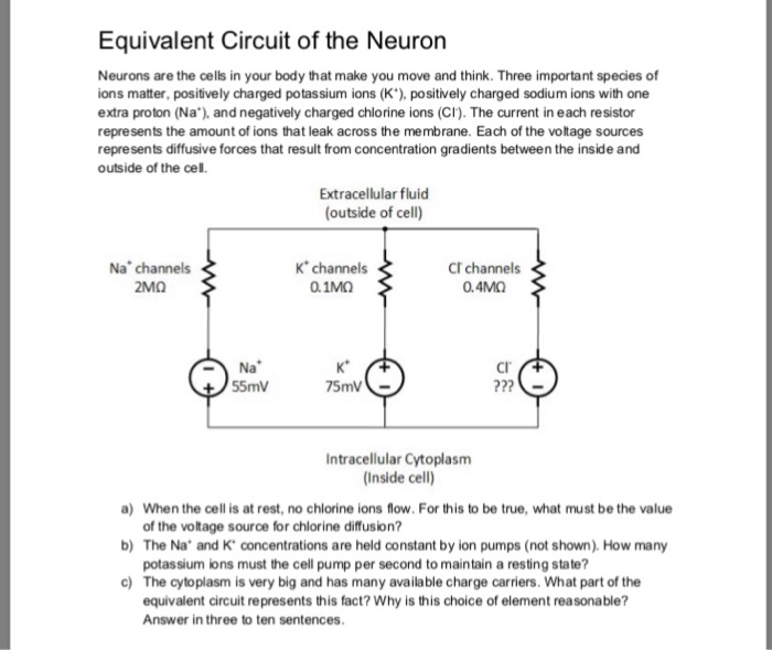 Equivalent Circuit of the Neuron Neurons are the cells in your body that make you move and think. Three important species of ons matter, positively charged potassium ions (K), positively charged sodium ions with one extra proton (Na), and negatively charged chlorine ions (CI). The current in each resistor represents the amount of ions that leak across the membrane. Each of the voltage sources represents diffusive forces that result from concentration gradients between the inside and outside of the cell. Extracellular fluid (outside of cell) K channels 0.1MO Na channels CT channels 0.4ΜΩ Cl Na 55mV 75mV Intracellular Cytoplasm Inside cell) a) b) The Na and K concentrations are held constant by ion pumps (not shown). How many c) When the cell is at rest, no chlorine ions flow. For this to be true, what must be the value of the voltage source for chiorine diffusion? potassium ions must the cell pump per second to maintain a resting state? The cytoplasm is very big and has many available charge carriers. What part of the equivalent circuit represents this fact? Why is this choice of element reasonable? Answer in three to ten sentences