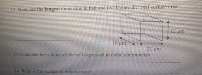 12. Now, cut the longest dimension in half and recaleulate the total surfâace area. 12 lun 18 μη 13. Calculate the volume of the ceil expressed in cubic micrometers. 14. What is the surface to volume ratio?