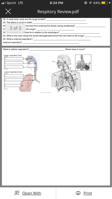 Sprint LTE 8:24 PM @ 64% -+ Respitory Review.pdf 28. In what body cavity are the lungs located? 29. The taking in of air is c