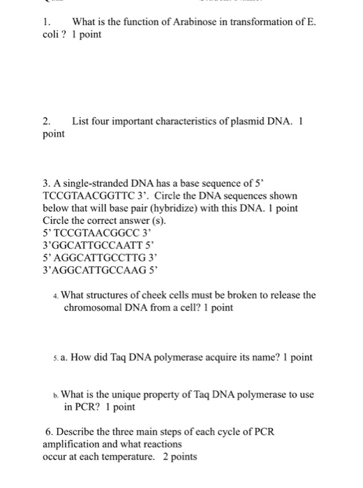 What is the function of Arabinose in transformation of E. coli? 1 point 2. List four important characteristics of plasmid DNA. 1 point 3. A single-stranded DNA has a base sequence of 5 TCCGTAACGGTTC3. Circle the DNA sequences shown below that will base pair (hybridize) with this DNA. 1 point Circle the correct answer (s). 5 TCCGTAACGGCC 3 3GGCATTGCCAATT 5 5 AGGCATTGCCTTG 3 3AGGCATTGCCAAG 5 4. What structures of cheek cells must be broken to release the chromosomal DNA from a cell? 1 point s.a. How did Taq DNA polymerase acquire its name? 1 point b. What is the unique property of Taq DNA polymerase to use in PCR? 1 point 6. Describe the three main steps of each cycle of PCR amplification and what reactions occur at each temperature. 2 points