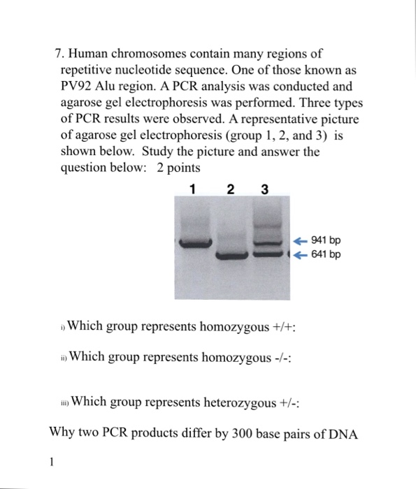 7. Human chromosomes contain many regions of repetitive nucleotide sequence. One of those known as PV92 Alu region. A PCR analysis was conducted and agarose gel electrophoresis was performed. Three types of PCR results were observed. A representative picture of agarose gel electrophoresis (group 1, 2, and 3) is shown below. Study the picture and answer the question below: 2 points 941 bp 641 bp Which group represents homozygous +/: in) Which group represents homozygous--: n Which group represents heterozygous+- Why two PCR products differ by 300 base pairs of DNA