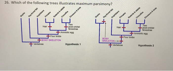 26. Which of the following trees illustrates maximum parsimony? Two Two Hair Hair bital Amniotic egg Amniotic egg Four limbs Four limbs BONY SKELETON → BONY SKELETON Hypothesis 2