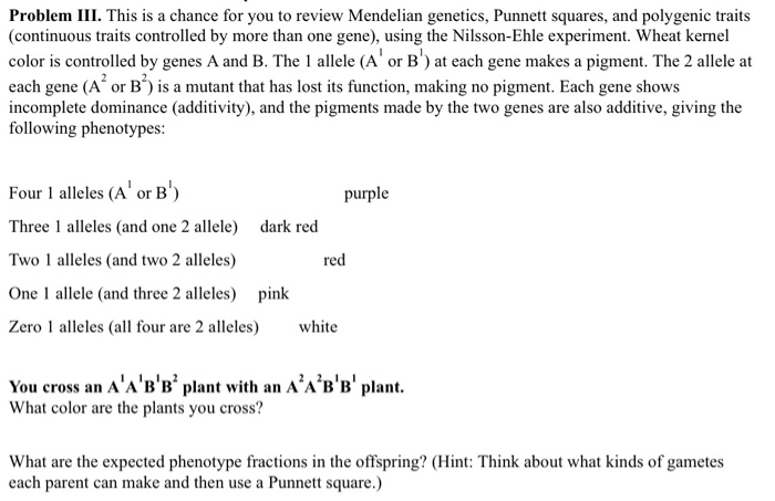 Problem III. This is a chance for you to review Mendelian genetics, Punnett squares, and polygenic traits (continuous traits controlled by more than one gene), using the Nilsson-Ehle experiment. Wheat kernel color is controlled by genes A and B. The 1 allele (A or at each gene makes a pigment. The 2 allele at each gene (A or B) is a mutant that has lost its function, making no pigment. Each gene shows incomplete dominance (additivity), and the pigments made by the two genes are also additive, giving the following phenotypes: Four 1 alleles (A orB) Three 1 alleles (and one 2 allele) dark red Two 1 alleles (and two 2 alleles) One 1 allele (and three 2 alleles) pink Zero 1 alleles (all four are 2 alleles) white purple red You cross an AABB plant with an AABB pla What color are the plants you cross? What are the expected phenotype fractions in the offspring? (Hint: Think about what kinds of gametes each parent can make and then use a Punnett square.)