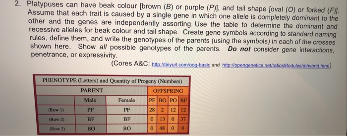 2. Pla atypuses can have beak colour [brown (B) or purple (P)l, and tail shape (oval (O) or forked (F)l. Assume that each trait is caused by a single gene in which one allele is completely dominant to the other and the genes are independently assorting. Use the table to determine the dominant and recessi rules, define them, and write the genotypes of the parents (using the symbols) in each of the crosses shown here. Show all possible genotypes of the parents. Do not consider gene interactions penetrance, or expressivity ive alleles for beak colour and tail shape. Create gene symbols according to standard naming (Cores A&C: http/itinyuri.com/oog-basic and htplopengenetics.net/ratiosModules/dhybrid htm) PHENOTYPE (Letters) and Quantity of Progeny (Numbers) PARENT OFFSPRING Male | Female (Row 1) (Row 2) (Row 3) PF BF BO PF BF BO |PF|BOIPO- 28 2 12 12 0 13 037 0 480o