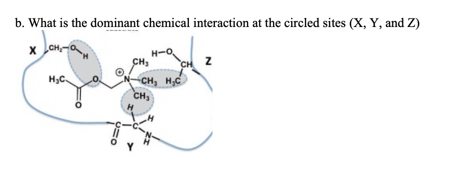 b. What is the dominant chemical interaction at the circled sites (X, Y, and z) H3C CHs