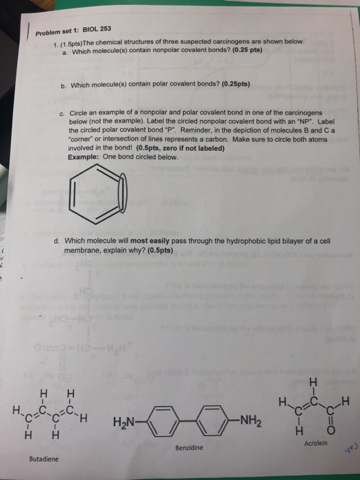 Problem set 1: BIOL 253 1. (1.5pts)The chemical structures of three suspected carcinogens are shown below. a. Which molecule(s) contain nonpolar covalent bonds? (0.25 pts) b. Which molecule(s) contain polar covalent bonds? (0.25pts) Circle an example of a nonpolar and polar covalent bond in one of the carcinogens below (not the example). Label the circled nonpolar covalent bond with an NP. Label the circled polar covalent bond P. Reminder, in the depiction of molecules B and C a corner or intersection of lines represents a carbon. Make sure to circle both atoms involved in the bond! (0.5pts, zero if not labeled) Example: One bond circled below c. d. Which molecule will most easily pass through the hydrophobic lipid bilayer of a cell membrane, explain why? (0.5pts) NH2 H O Acrolein НН Benzidine Butadiene