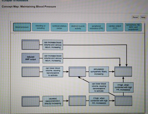 &Chapter 19 Homework Concept Map: Maintaining Blood Pressure Reset Help epinephrine, NE bleeding or sweating peripheral resistance (PR) cardiac output (CO) blood pressure cardioaccelatory skeletal muscle ADH, and angiotensin center activay can increase blood volume and venous returm, increasing can increase blood volume and venous return, increasing ANP output can lower blood volume, causing baroreceptors to activate stimulate(s) sympathetic tibers, ncreasing can lower blood volume, causing it high, when combined with high PR, increase(s) to activate causels) vasoconstriction, directy increasing t high, when combined with high CO, increase(s)