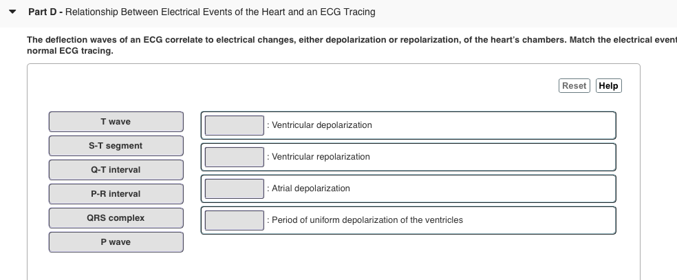 Part D - Relationship Between Electrical Events of the Heart and an ECG Tracing The deflection waves of an ECG correlate to electrical changes, either depolarization or repolarization, of the hearts chambers. Match the electrical event normal ECG tracing. Reset Help T wave Ventricular depolarization S-T segment Q-T interval P-R interval QRS complex P wave Ventricular repolarization Atrial depolarization Period of uniform depolarization of the ventricles