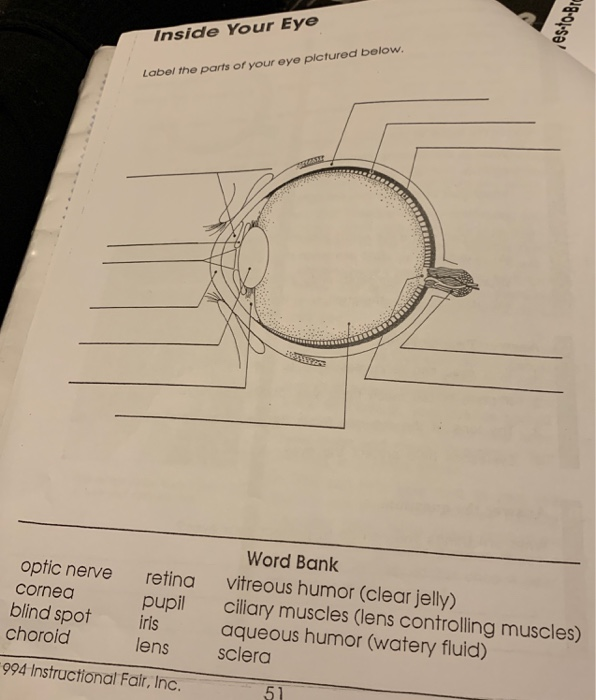 Inside Your Eye Label the parts of your eye pictured below. Word Bank vitreous humor (clear jelly) ciliary muscles (lens controlling muscles) optic nerve cornea retina pupil lens blind spot rlsaqueous humor (watery fluid) choroid sclera 994 Instructional Fair, Inc. 51