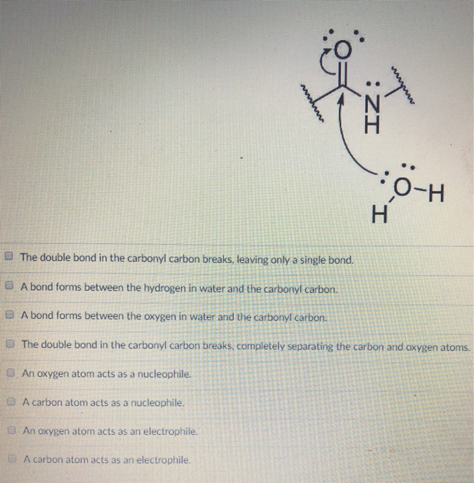 O-H ■ The double bond in the carbonyl carbon breaks, leaving only a single bond. E A bond forms between the hydrogen in water and the carbonyl carbon. O A bond forms between the oxygen in water and the carbonyl carbon. O The double bond in the carbonyl carbon breaks, completely separating the carbon and oxygen atoms. An oxygen atom acts as a nucleophile. A carbon atom acts as a nucleophile. An oxygen atom acts as an electrophile. A carbon atom acts as an electrophile.